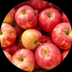 リンゴの画像